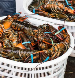 Frozen Canadian Lobster Sales Booming to China