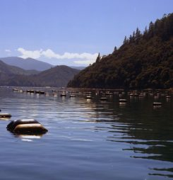 NZ firm's new live mussel facility a first in China