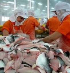 Hungry Chinese market appeals to Vietnam with USDA equivalency looming
