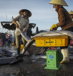 Affluent China Emerges as Vietnam's Major Seafood Buyer