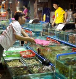 China seafood market indicators spell upside for world prices