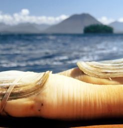 Live Canadian Geoducks Arrive at New Airport Clearance Site in Qingdao For First Time