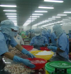 Vietnam's Shrimp Exports to China Surge 30% in First Half of Year