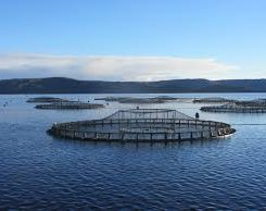Australian fresh salmon exports to China surge, as do Norway's to Vietnam